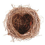 BACK-TO-SCHOOL_-NEST_COVER_shutterstock_