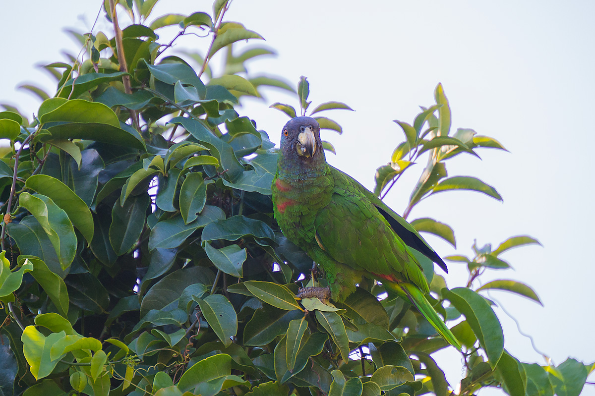 2014-Dominica_D4_999
