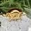 Thumbnail: Timbre de bronce y piel con forma de tortuga .