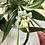 Thumbnail: Anillo conjunto de perlas.