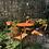 Thumbnail: Juego mesa y 4 sillas estilo danés .