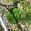 Thumbnail: Platito cuadrado duralex verde.