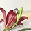 Thumbnail: Anillo forma de rosa.