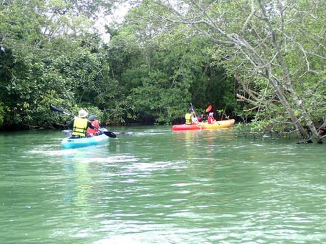 mangrove kayaking singapore