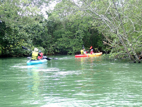 mangrove kayaking singapore