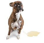 Carpet_cleaning_Gold_Coast_pet_stain_tre