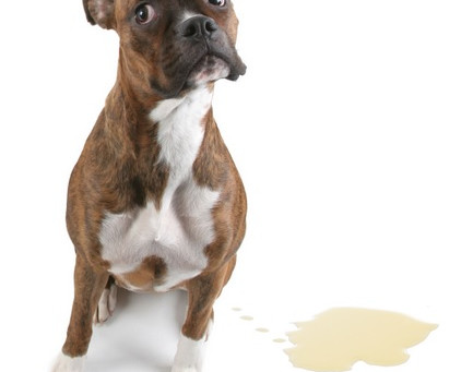 Carpet cleaning - Pet stains - tips and advice