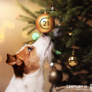 3.Dog Nose – 7-11 December 2020
