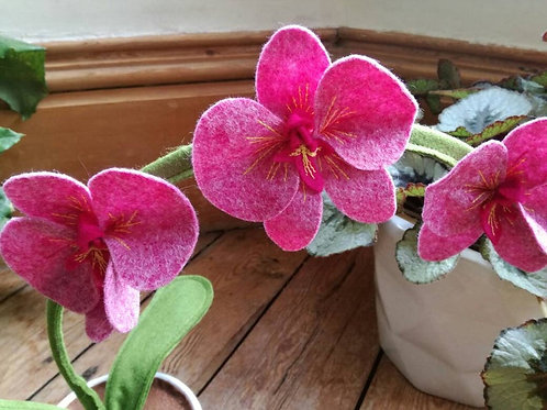 Cerise pink orchid