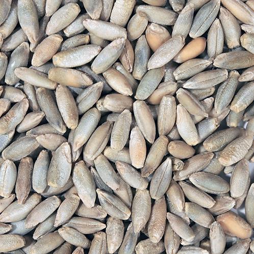 Organic rye grain (100g)