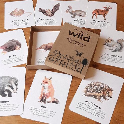 Mammal flashcards (set of 10)
