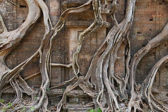 Force of nature, Cambodia
