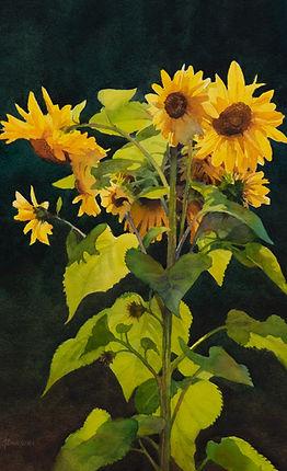 Sunflowers, Anderson Farm.jpg
