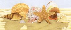 Seashells 2