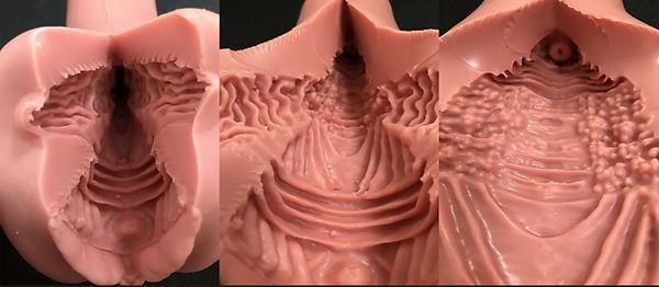 一體式下體解剖圖