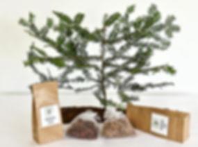 Waldheimat Naturprodukte für Ihre Gesundheit