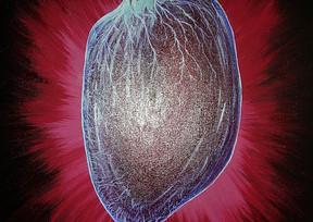Coeur tableau médiumnique art référencement dans Google Images