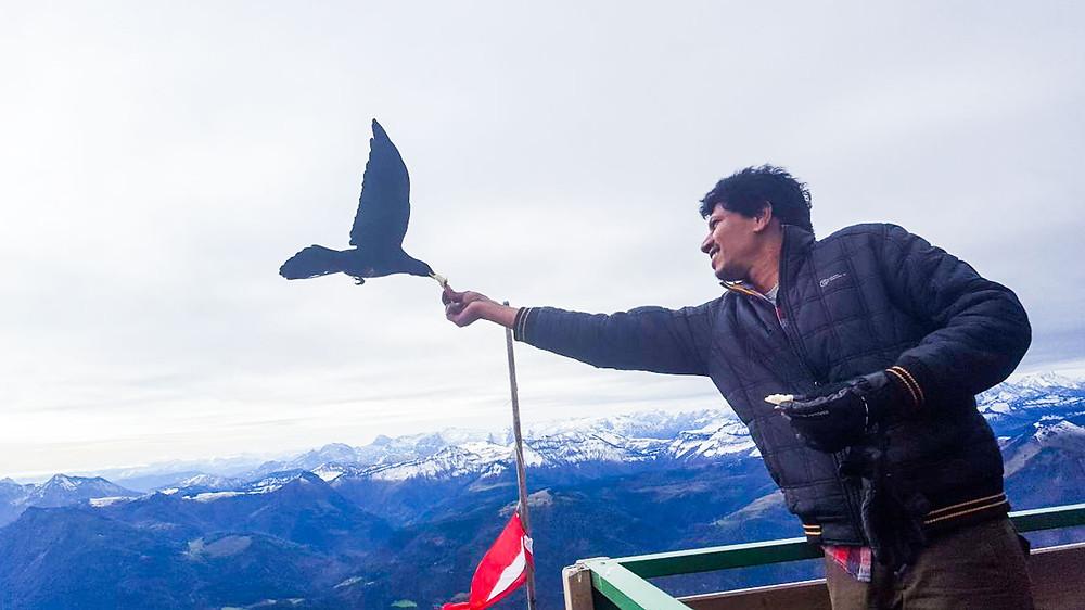 Feeding the Birds on top of Schafberg