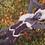 Thumbnail: [ZIN] Star Bustier (for Gen3)