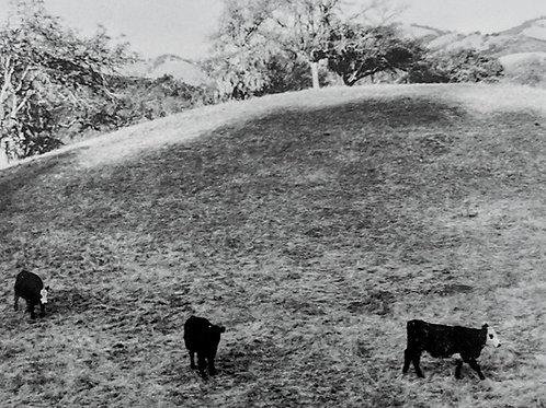 """Small Cows #1, Carmel Valley, CA "" (framed) Arabella Colton"