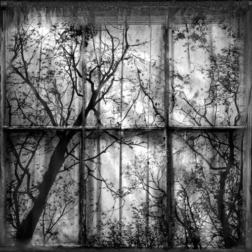 """""""finding signs of peace outside my window"""" jd weiss"""