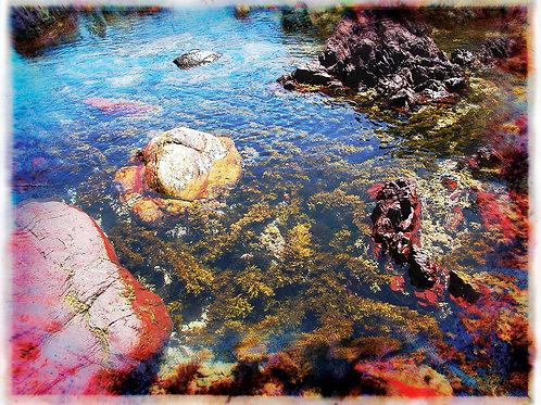 """Tide pool, New Zealand"" Grey Ivor Morris"