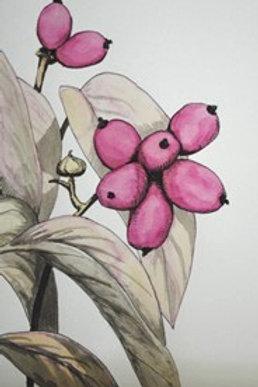 """Dogwood Berries"" Linda Lynton"