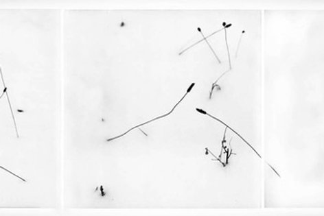 """birds in the snow"" jd weiss"