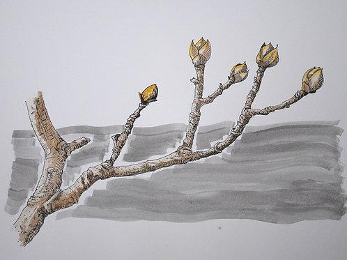 """""""Spring Will Come"""" Linda Lynton"""