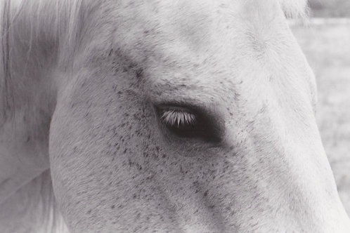 """Rocky's Eyelash"" (unframed) Arabella Colton"
