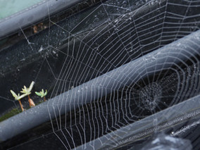 "Misty morn with spiders and an ""On car allotment"""