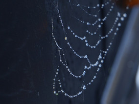 Today's sunlit spider web on the car