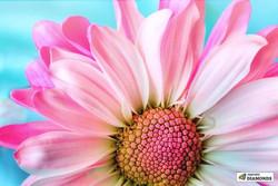pink-lemonade-blossom-paint-with-diamond