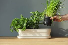 herb planter pot and hand.jpg