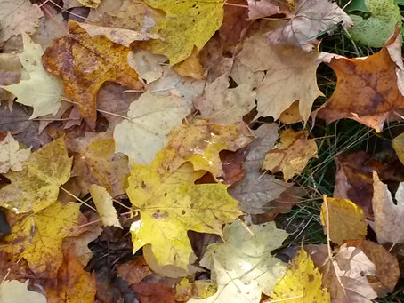 Stand Strong, Don't Fall Like Autumn Leaves