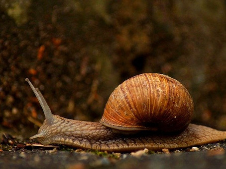 SOMETIMES IT PAYS TO BE AS SLOW AS A SNAIL