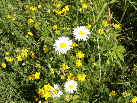 Eternal Perspectives: The Scent of Daisies