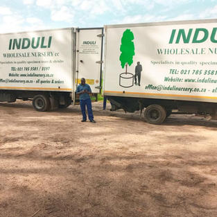 Induli trucks meeting