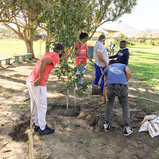Kommetjie Primary - Planting day