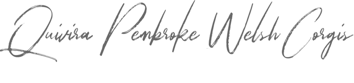 Quivira Pembroke Welsh Corgis Logo