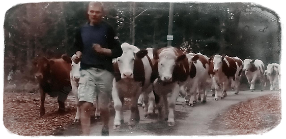 Descente des vaches.png