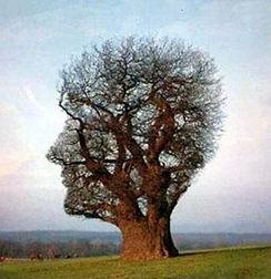 Arborescence-de-la-pensée-291x300.jpg