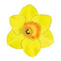 24 Narcissus Flower.png