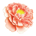 20 Flower Watercolor.png