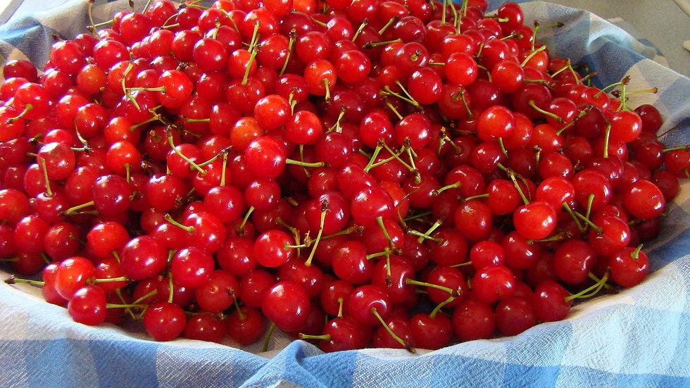 Michigan Tart Cherries