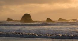 OCNMS_Ruby Beach_Nick Zachar-10.jpg