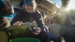 Kelp Restoration and Urchins_GFNMS_Credi
