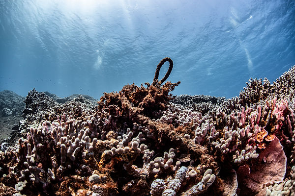 Kahoolawe Dive_Hawaii_Credit Nick Zachar