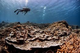 Kahoolawe Dive_Hawaii_Credit Nick Zachar