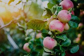 bomen en fruittuinen